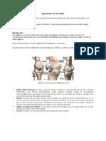 Ligamentos de la rodilla.docx