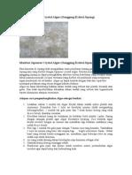 Manfaat Japanese Crystal Algae.doc