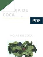 LA HOJA DE COCA