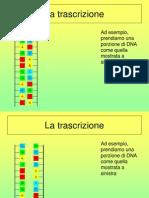Sintesi Proteica ANIMATA