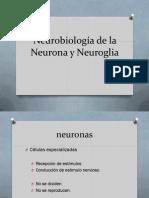 tema 1 Neurobiología de la Neurona y Neuroglia 1.1