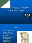 10-Pared_Toráxica._Huesos-Articulaciones y musculos