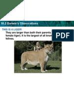 linnaeus classification powerpoint