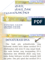 Denaturasi, Renaturasi, Dan Perbaikan Dna Final
