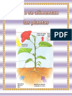 La  alimentacón de las  plantas