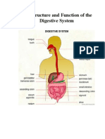 ohp of digestive system