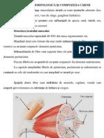 Structura Si Morfologia Carnii-7