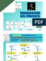 T19-piruvato-pagina-11