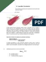 FISIOLOGIA8circulação
