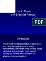 How to Draw Brachial Plexus