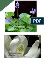 Növénytan jegyzet - SZIE MKK