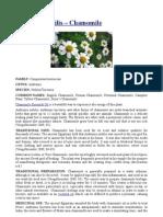 Anthemis nobilis – Chamomile