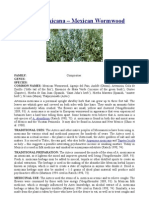 Artemisia mexicana – Mexican Wormwood
