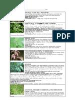 23421290-Ervas-Rituais.pdf