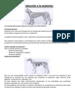 Introduccion a La Anatomia Clase 1