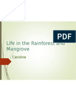 rainforest and mangrove life