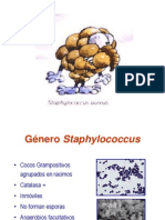 Expo - Género Staphylococcus