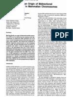 Identification of an Origin of Bidirectional DNA Replication in Mammalian Chromosomes