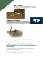 7 Shocking Snake Stories