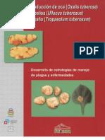 Produccion de Oca, Papalisa e Isano. Desarrollo de Estrategias de Manejo de Plagas y Enfermedades