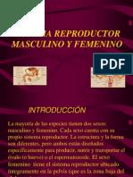 1-SIST REPRODUCTOR MASCULINO Y FEMENINO.ppt
