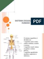 207_361sistema_esqueletico