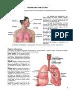 18 - Sistema Respiratorio.pdf