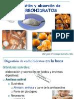 digestión crbohidratos
