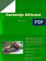 Caramujo africanoPALESTRA