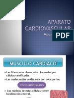 msculo-cardiaco-1220997538385185-9
