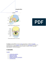 Anatomia Del Craneo, Musculos, Articulaciones