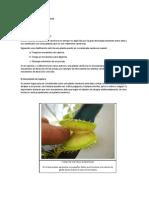 Alejandro_Linconao-Definiendo_las_plantas_carnívoras