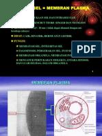 (2) Membran Plasma