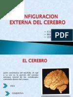 Expocision Configuracion Externa Del Cerebro (2)