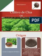 Cultivo de Chia