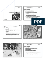 P05_Toxoplasma