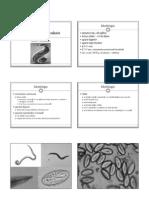 P07_Enterobius