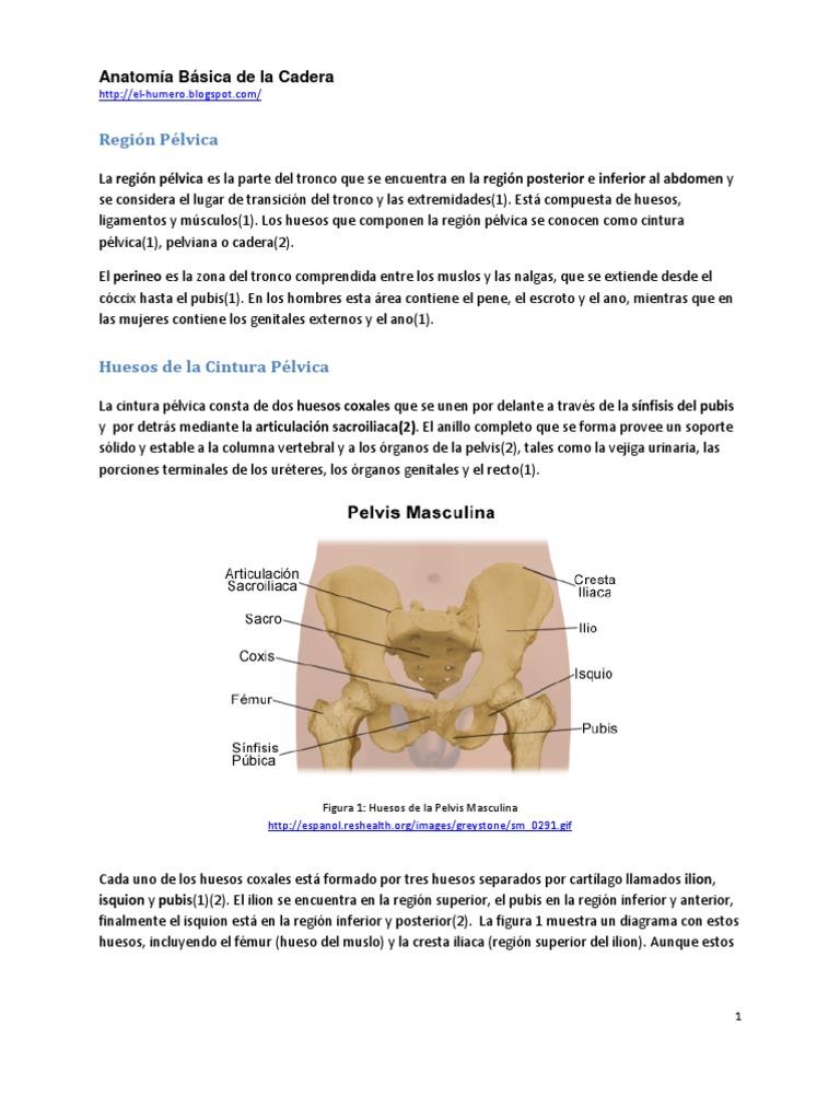 Dorable Diagrama De Hueso Pélvico Femenino Friso - Imágenes de ...