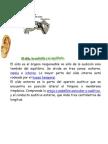 ÓRGANO DE LOS SENTIDOS EL OIDO