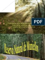 Reserva de Muniellos