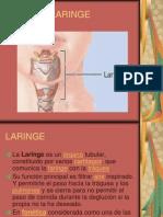 laringe-120078874859802-2