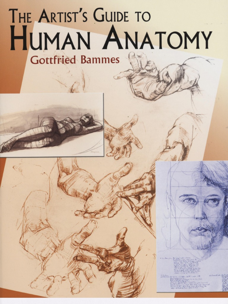 Gottfried Bammes The Artists Guide To Human Anatomy 2004