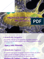 organizacinmolecular-091004172049-phpapp01