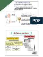 sistema_nervioso.pdf