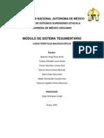 Exposicion Tegumentario.docx