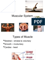 Ch 08 Muscular System