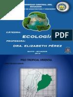 Piso Tropical Oriental, Estribaciones y Valles Interandinos