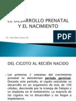 El Desarrollo Prenatal y El Nacimiento