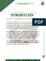 p - Cultivo de La Lechuga - Original