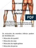 Músculos do Membro Inferior